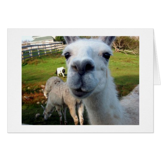 Goofy Llama Blank Greeting Card