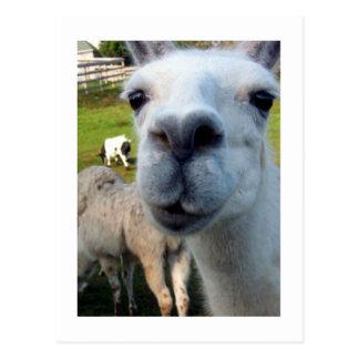 Goofy Llama Postcard