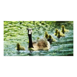 Goose Family Photo Cards