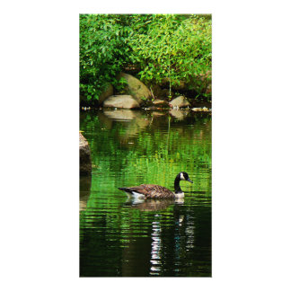 Goose Floating on Pond Photo Cards