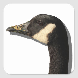 Goose Head Sticker