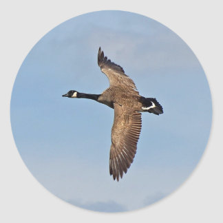Goose in Flight Classic Round Sticker