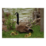 Goose Mom and Babies Poster