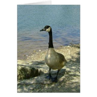 Goose on Rock Card