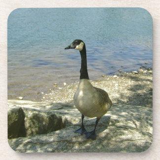 Goose on Rock Coaster