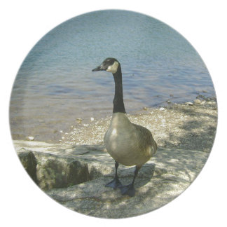 Goose on Rock Plate
