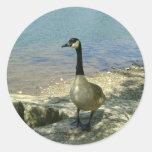 Goose on Rock Round Sticker