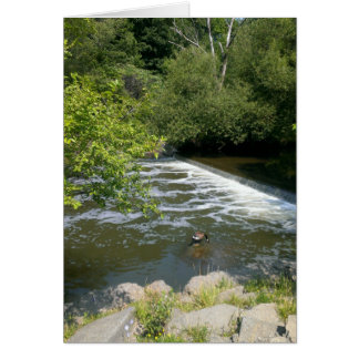 Goose on the river greeting card