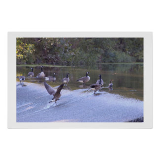 Goose Spreading Wings over Waterfall Poster