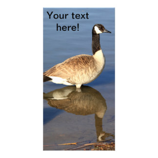 Goose standing in water photo cards