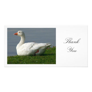 Goose - Thank You Photo Cards