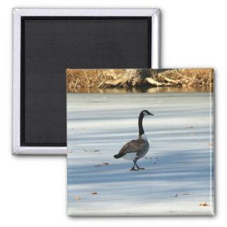 Goose walking Magnet