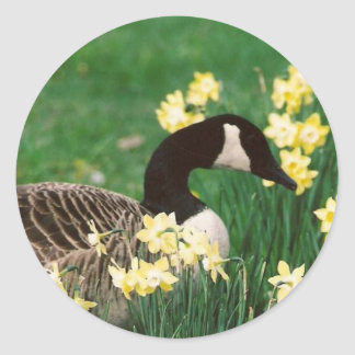 GOOSE WITH DAFFODILS CLASSIC ROUND STICKER