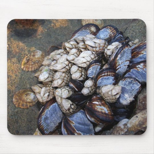 Goosenecks and Mussels Mouse Mat