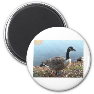 Goosey Goosey 6 Cm Round Magnet