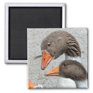 Goosey Goosey Magnet Fridge Magnets