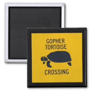Gopher Tortoise Crossing Square Magnet