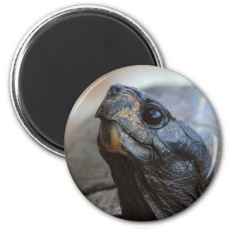 gopher tortoise magnet