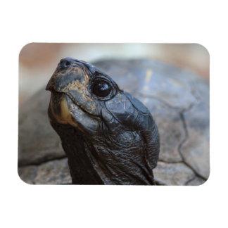gopher tortoise flexible magnet