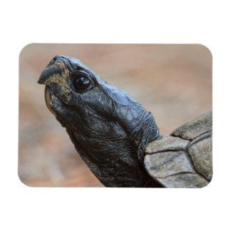 Gopher Tortoise Profile Vinyl Magnets