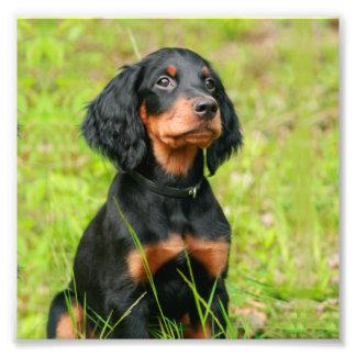 Gordon Setter Attentive Black Dog Puppy Photo Print