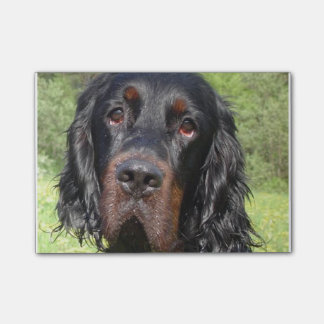 gordon setter.png post-it notes