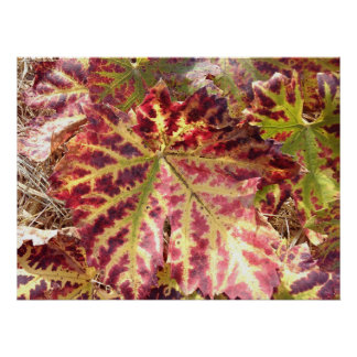 Gorgeous Autumnal Grape Leaf Poster