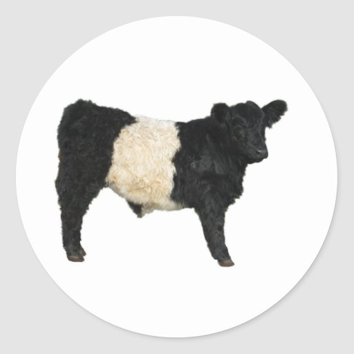 Gorgeous Belted Galloway Steer Cutout Stickers