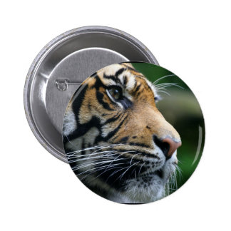 Gorgeous Bengal Tiger Face Buttons