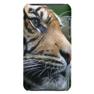 Gorgeous Bengal Tiger Face iPod Touch Case-Mate Case