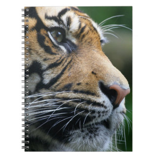 Gorgeous Bengal Tiger Face Notebooks