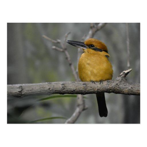 Gorgeous Bird Postcards