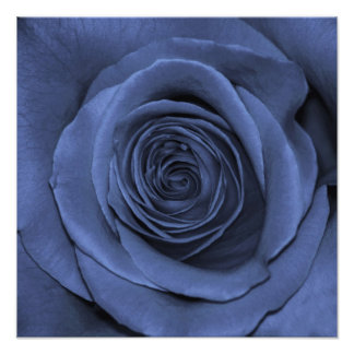 Gorgeous Blue Colored Rose Photograph