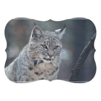Gorgeous Bobcat 13 Cm X 18 Cm Invitation Card