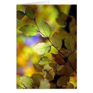 gorgeous card autumn colours