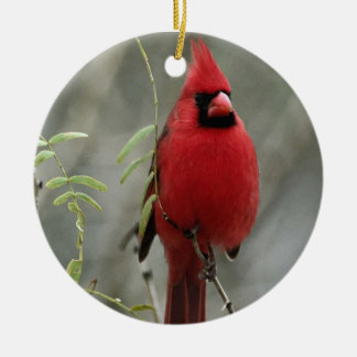 Gorgeous Cardinal Photo-  Ornament