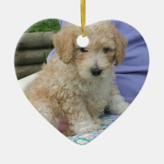 Gorgeous cavapoo puppy looking your way, isolated ceramic heart decoration