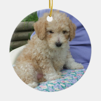 Gorgeous cavapoo puppy looking your way, isolated round ceramic decoration