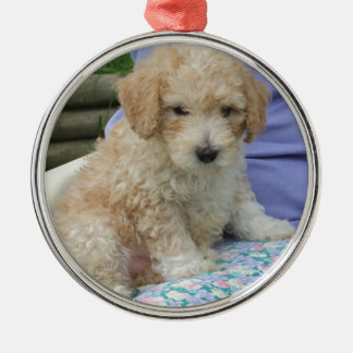 Gorgeous cavapoo puppy looking your way, isolated Silver-Colored round decoration