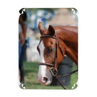 Gorgeous Chestnut Show Horse Rectangular Magnet