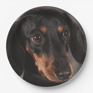 Gorgeous dachshund portrait 9 inch paper plate