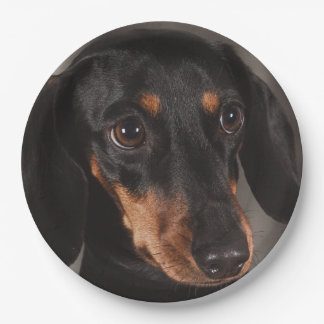 Gorgeous dachshund portrait paper plate