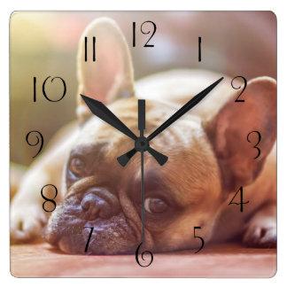Gorgeous french bulldog lying down square wall clock