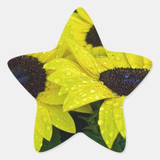 GORGEOUS GARDEN SUNFLOWERS STAR STICKER