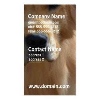 Gorgeous Golden Retriever Pack Of Standard Business Cards