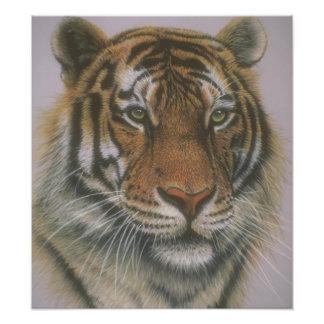 Gorgeous Green Eyed Tiger Poster Art Photo