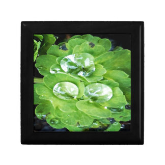 Gorgeous green small square gift box