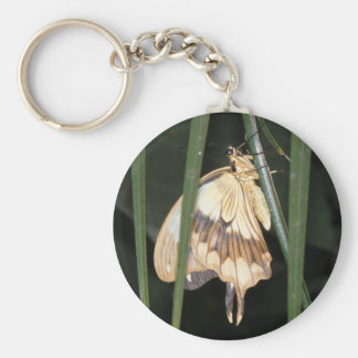Gorgeous Moth Keychain