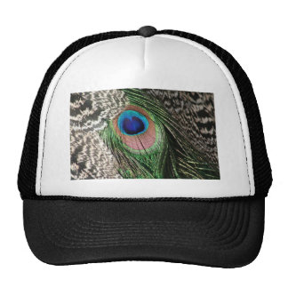Gorgeous Peacock Feather Design Mesh Hat