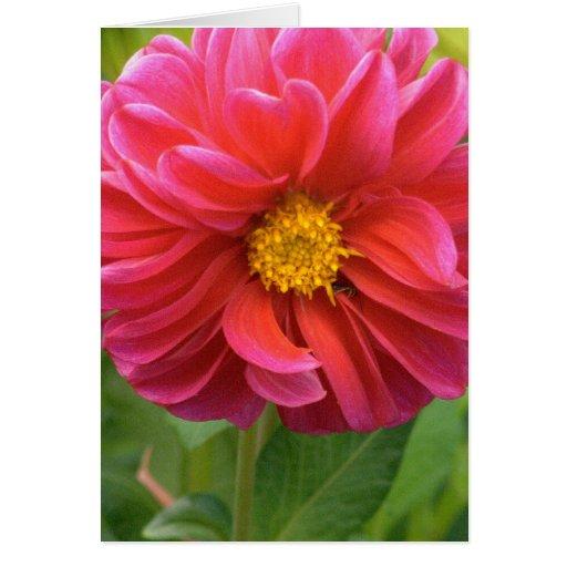 GORGEOUS PINK DAHLIA GREETING CARD